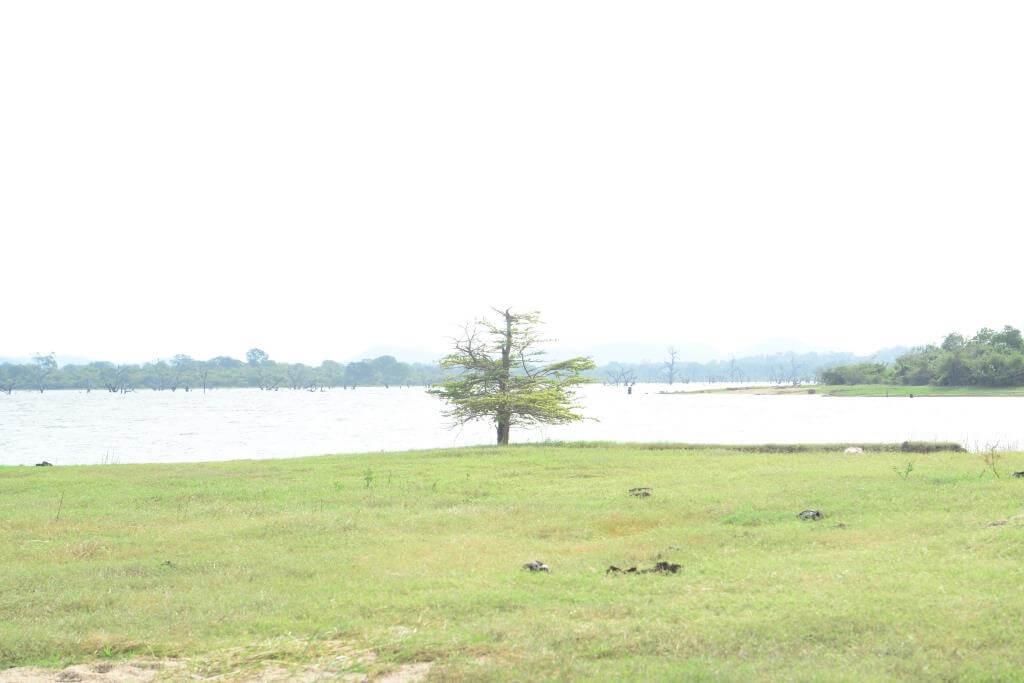 udawalawe hotels -  - Udawalawa Tank