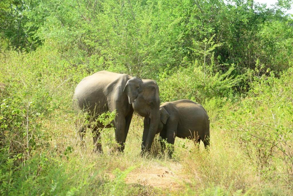 udawalawe hotels - Udawalawa hotel nildiyamankada - Udawalawa Safari & National Park
