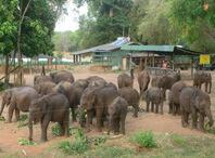 safari udawalawe - Room Service in Udawalwe Hotel